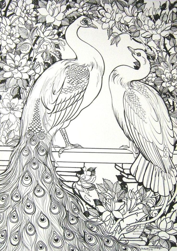 Dibujos de pavos reales » PAVOREALPEDIA